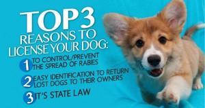 dog-licensing